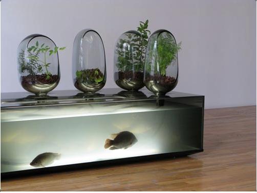 Comment faire un système aquaponique intérieure